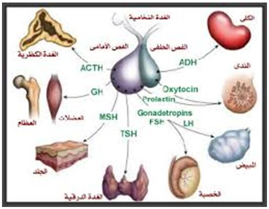 الأرق مزيج يتصعد ارتفاع هرمون Fsh عند النساء وعلاجه Dsvdedommel Com